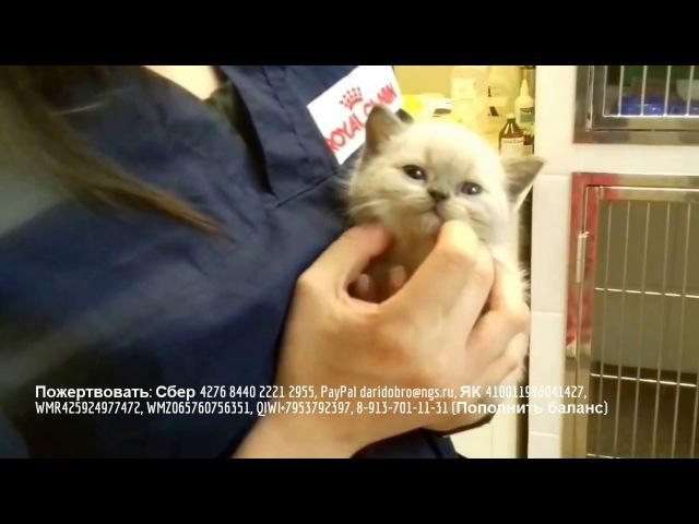 Задыхающийся котенок в клинике Бэст на стационаре rescue kitten Срочно нужна помощь в оплате обследования!