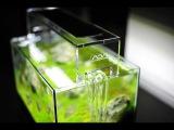 Поговорим об освещении в растительном аквариуме
