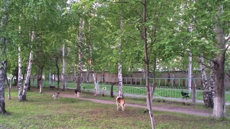 Бродячие собаки оккупировали территорию школы г Ковылкино №4