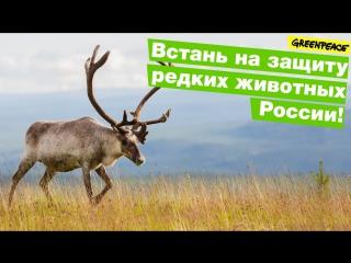 Встань на защиту редких животных России!