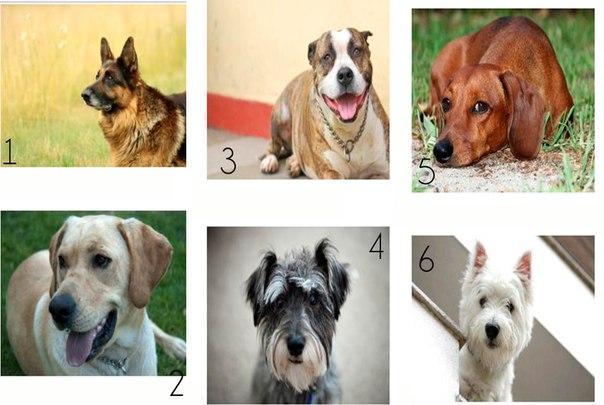 Какую собаку Вы бы хотели себе взять?  Нажмите на...