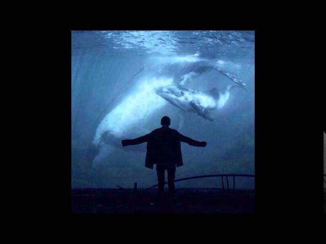 найтивыход - киты умирают в лужах бензина