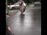 i.sw.kh video
