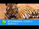 Ветеринары. Совёнок, пинчер, котёнок, тигр и лев. 2 сезон   Живая Планета