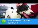 Ветеринары Удав конь ёж ездовая собака 2 сезон Живая Планета