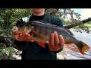 Рыбалка в Карелии Ловля крупного окуня