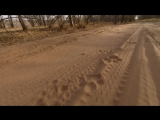 BBC Natural World 2012 - Queen of Tigers (HDTV x264)