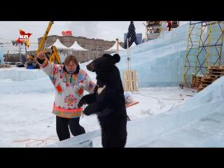 Гималайский медведь покатался на ледяных горках в Москве