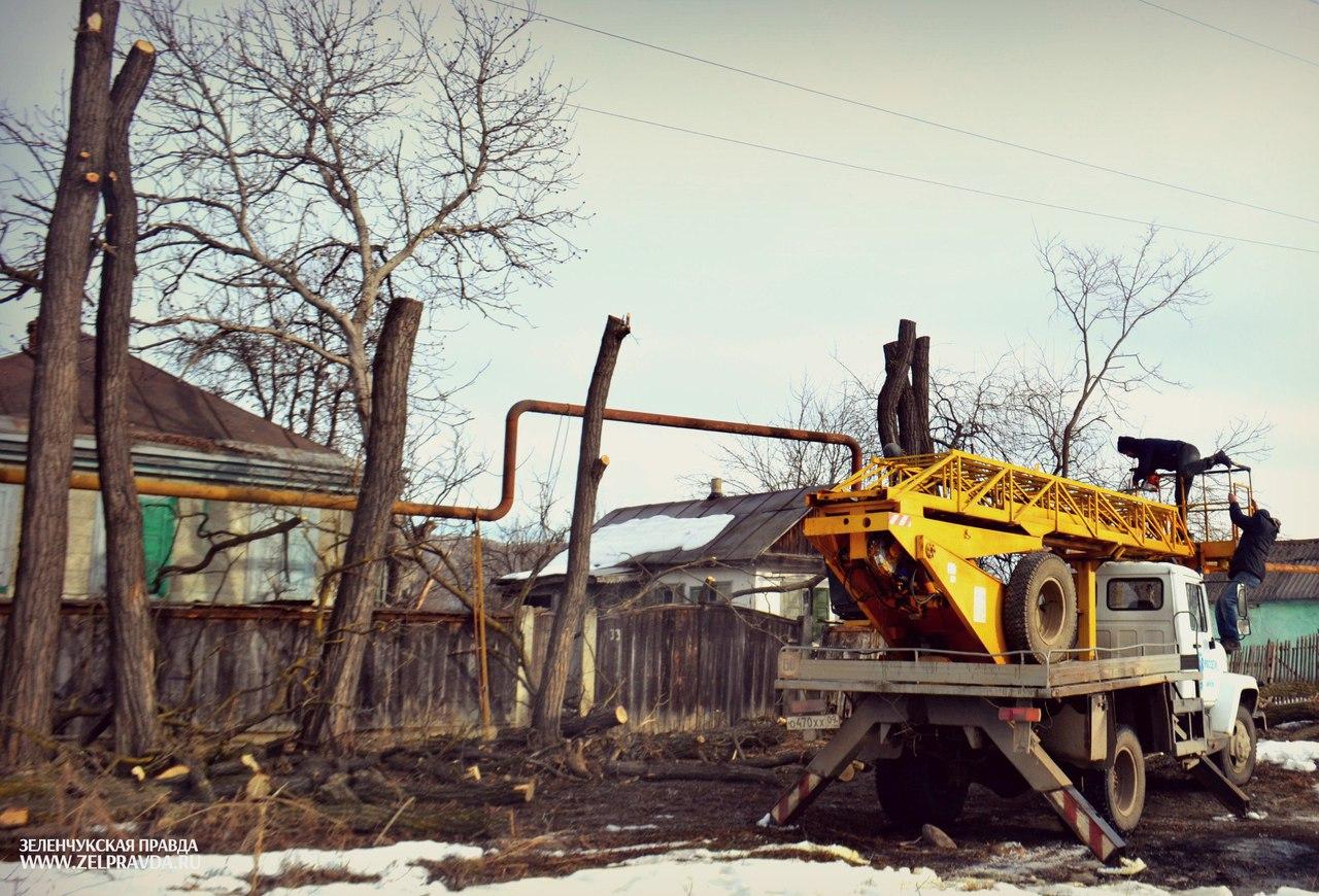 В станице Зеленчукской спилили аварийные деревья