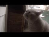 Кот на русском языке говорит: