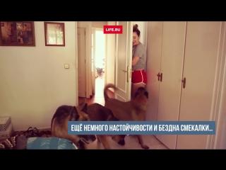 Девушка разыграла своих собак, спрятавшись за дверью