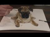 3Д рисунок мопса учимся рисовать
