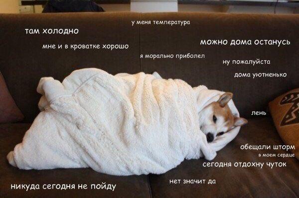 Фото №456245248 со страницы Анастасии Боровиковой