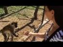 🐒На обезьянок можно смотреть бесконечно!🙊 Баба Фрося