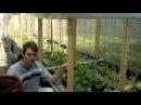 Теплица для огурцов .Вертикальное выращивание.