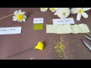 DIY craft tutorials How to make paper daisy by crepe paper