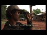 Изъятия дикого меда в Мондулкири .Mondulkiri wild honey