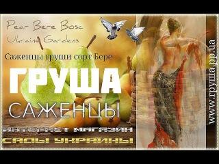 Саженцы груша бере боск купить Украина, 0957351986, 0985674877 Bere Bosc