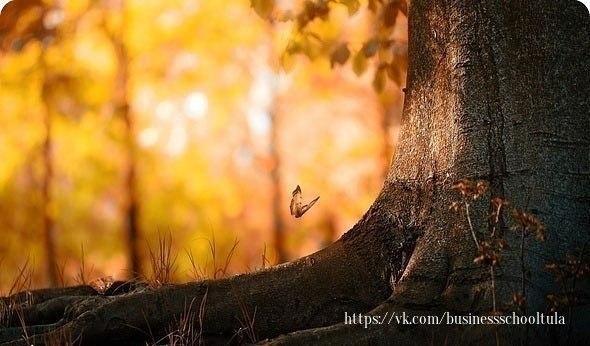 Твои ошибки - твоя сила. На кривых корнях, деревья стоят крепче.Кто