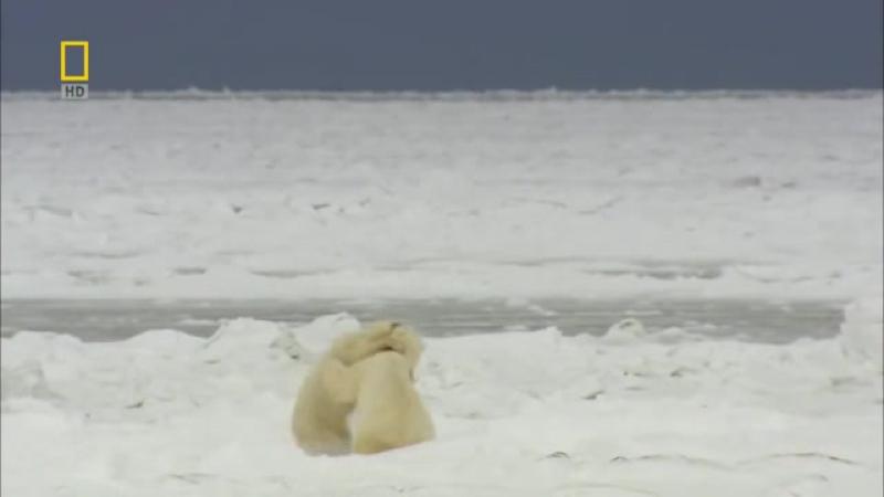 Дикая природа России Заполярье Арктика Документальные фильмы National Geographic Nat Geo WILD HD