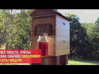 Как извлечь мед, не вынимая пчел из улья
