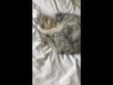 Мой кот разрядился