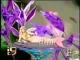 Аманда Лир очаровательная русалка.