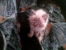 Котяшка зверь