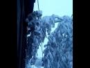 майский снежок Красноярск 2017
