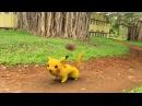 Покемоны в реальной жизни Pokemon GO In REAL LIFE