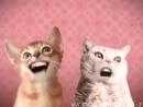 Numa cat /abandobed :3