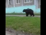 Это Россия! Камчатка, Вилючинск, 8:30 утра!