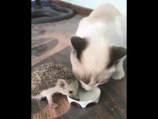 Два друга. Ежик Аркадий и кот Валера.