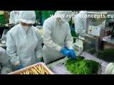 Mass Production Machine of Sushi Roll(Maki) for Sushi Factory
