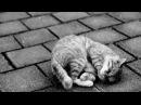 Супер грустная история до слёз Уродливый уличный кот