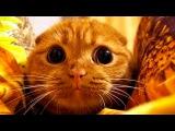 Приколы с котами - ТОПовая подборка