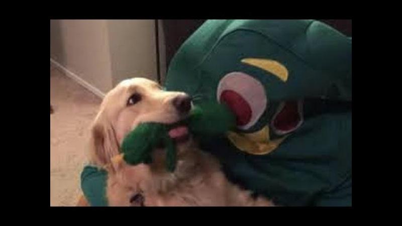 Dono se fantasia de brinquedo preferido de cão e choca universo canino