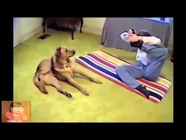 Собака делает йогу с хозяином. Dog doing yoga.