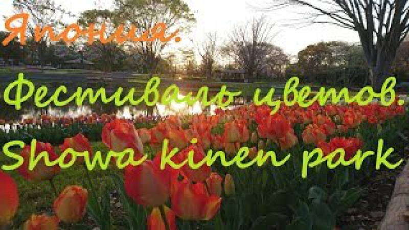 Япония Фестиваль цветов и сакура Showa kinen park 2017