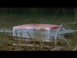Дьявольский остров (2003)