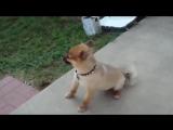 Смешные животные Как чихают разные животные Очень смешное видео Приколы с животными