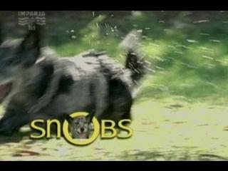 Т/С Собака по имени Снобз 22 серия (2003г)