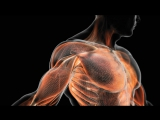 BBC Тело человека 1 История жизни / The Human Body Кристофер Спенсер / Christopher Spencer