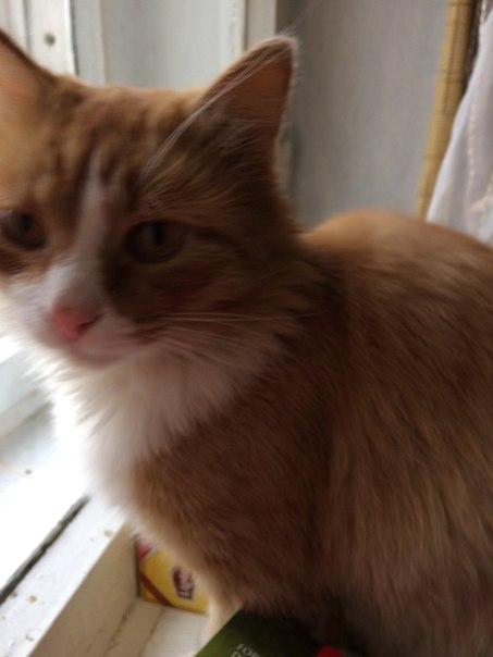 Около «Пятёрочки» на ю-з (бывш.Радо)кот увязался, пришлось забрать дом
