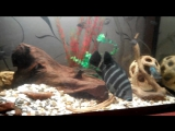 аквариум 120л