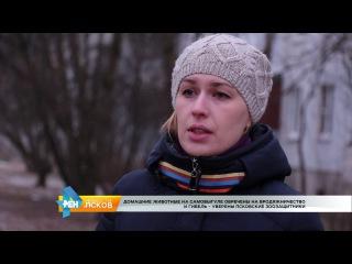 РЕН Новости Псков 12.01.2017 Собака инвалид по кличке Дума ищет хозяина