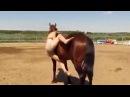 Πάει να ανέβει στο άλογο αλλά δεν μπορεί, δείτε τη 957