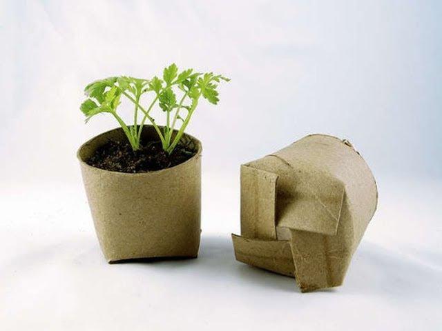 Стаканчики для рассады из втулок от туалетной бумаги/ Посев семян в рулоны на ра ...