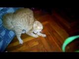 Самые пугливые кошки. Смешные коты боятся всего