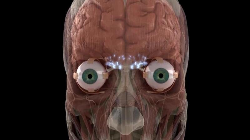 1. Тело человека. Грани возможного - Зрение